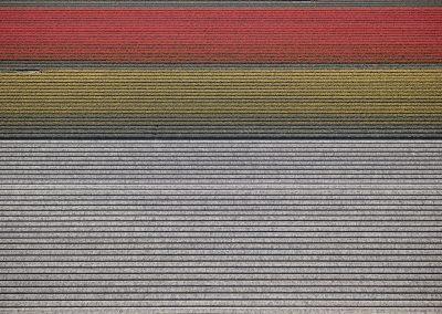 Veld 14, Noordoostpolder, Flevoland, The Netherlands, 2016