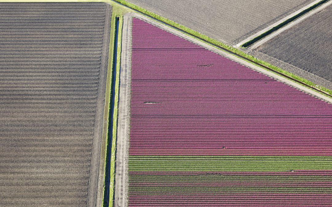 Veld 24, Noordoostpolder, Flevoland, The Netherlands, 2016