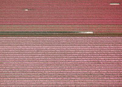Veld 4, Noordoostpolder, Flevoland, The Netherlands, 2016