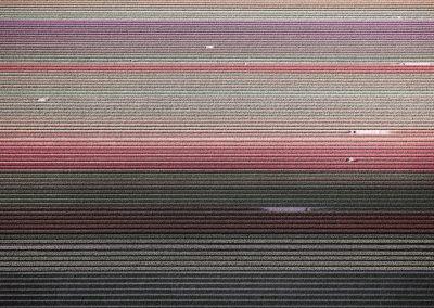 Veld 5, Noordoostpolder, Flevoland, The Netherlands, 2016