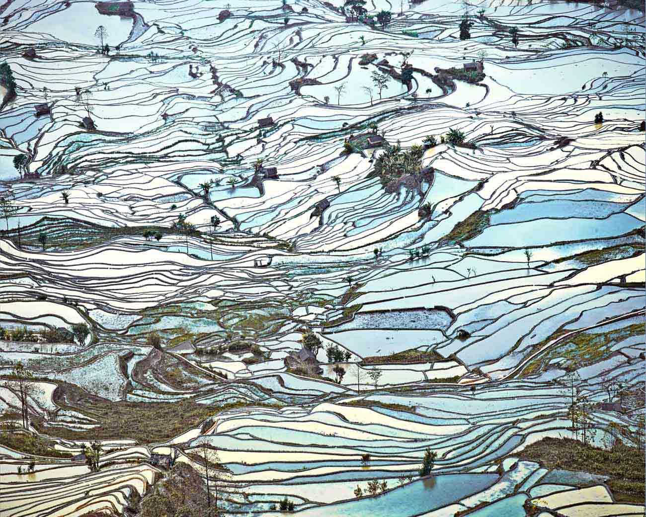 Rice Terraces, David Burdeny