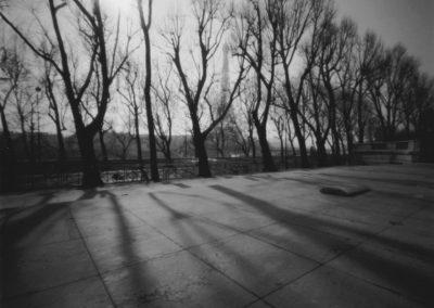 Trees, Paris, 2003