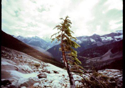 Lone Tree, 2000