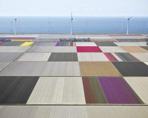 Tulips & Turbines 1, Flevoland, The Netherlands, 2016