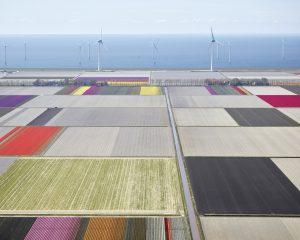 Tulips & Turbines 2, Flevoland, The Netherlands, 2016