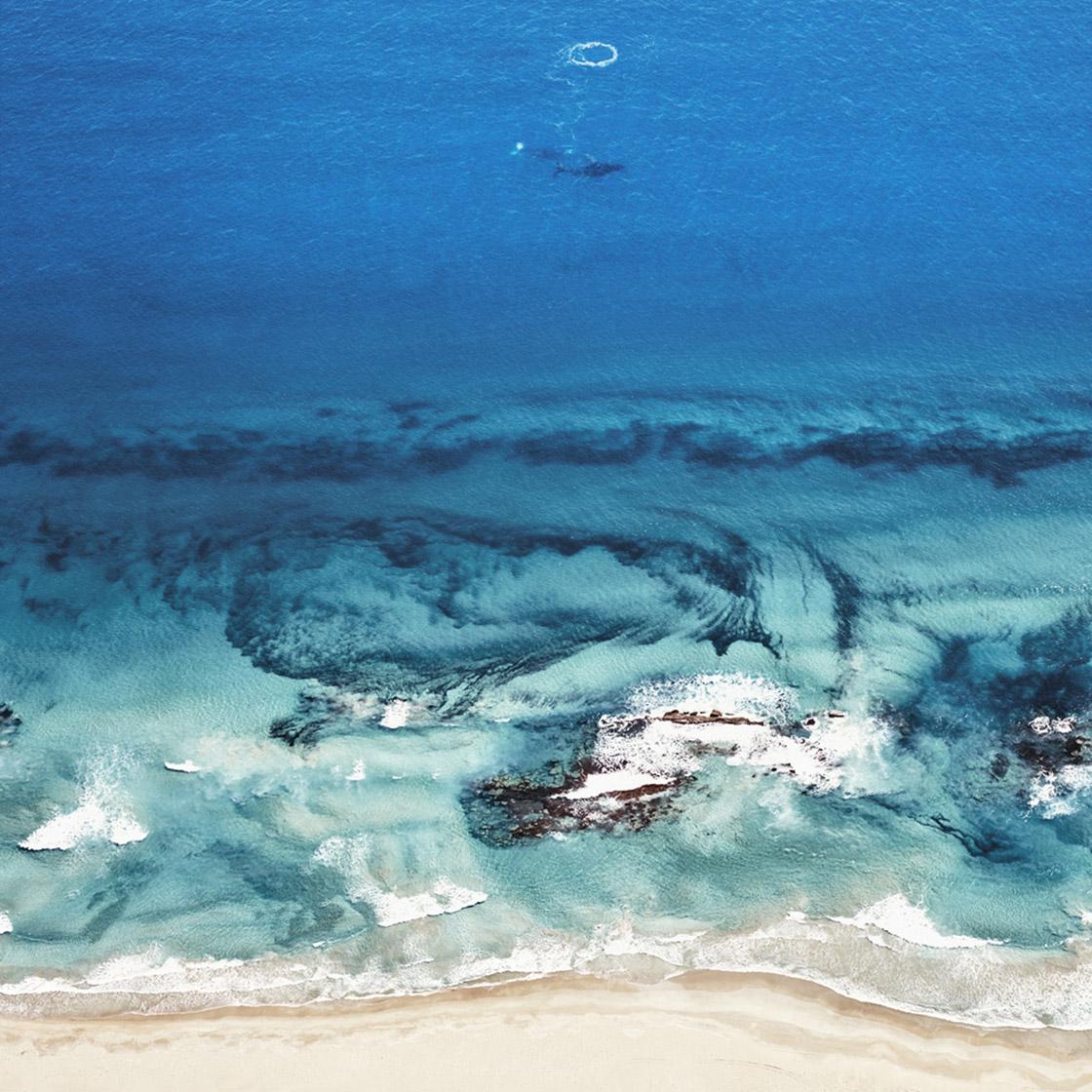 HumpbackWhales Kalbari Western Australia 2016