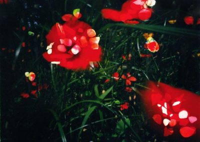 Diane Bos – Flanders Poppies with Stones, 2016, edition 1/1