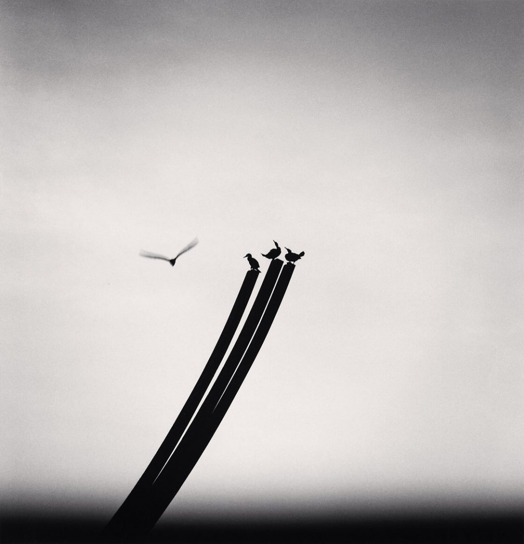 Four Birds, St. Nazaire, France - Michael Kenna