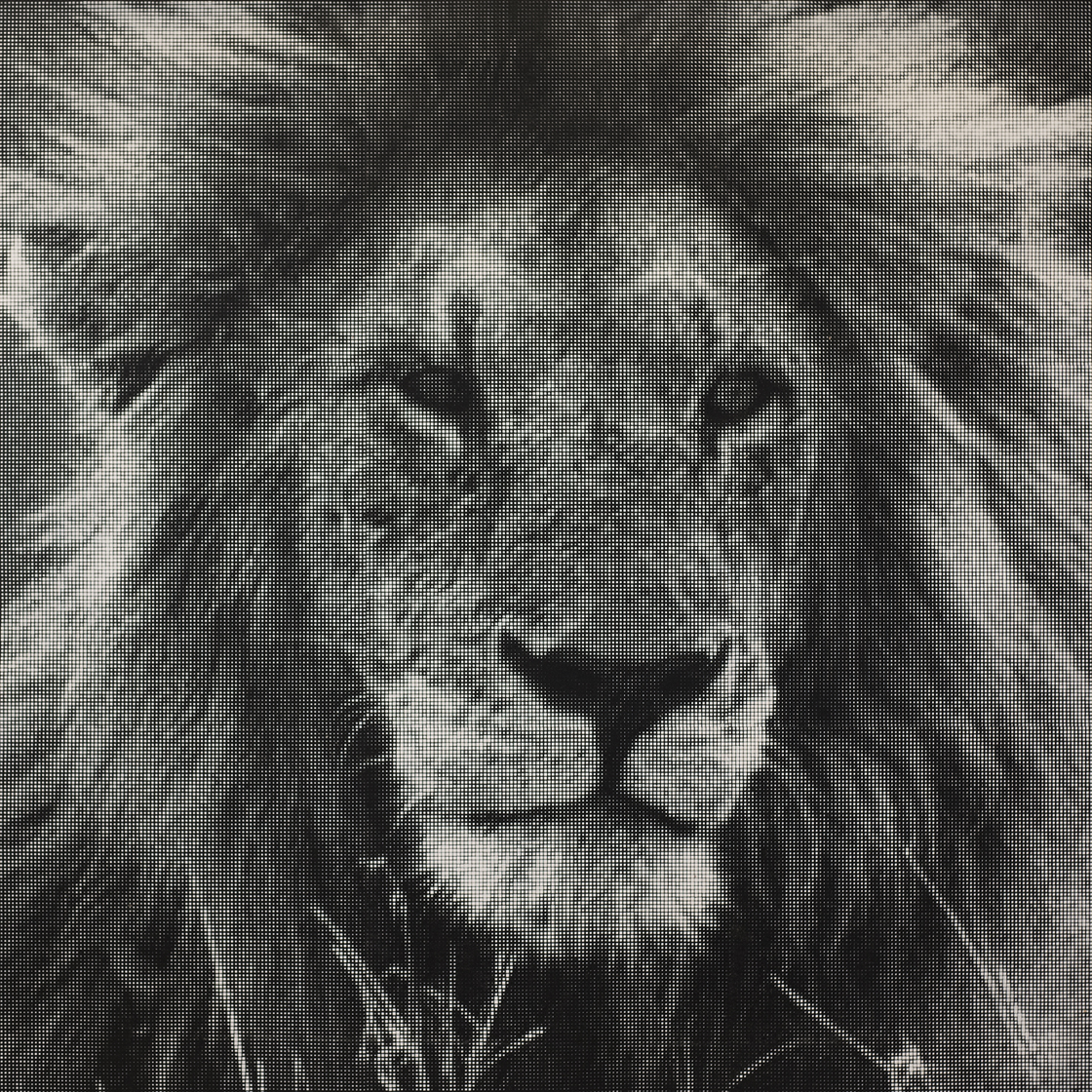 Lion 1, 72.25 x 72 x 1.25 Inches, Stenciled Spray Acrylic on Linen, 2019 - William Betts