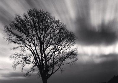 Michael Kenna – Philosopher's Tree, Study 3, Biei, Hokkaido, Japan