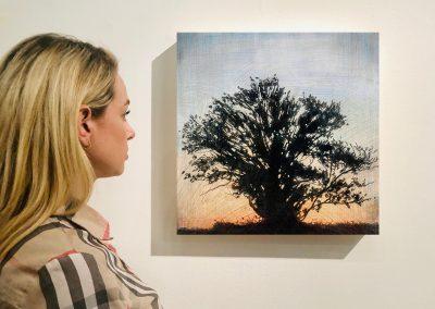 "Tree 1, 16"" x 16"", Installation - Stephen Hutchings"