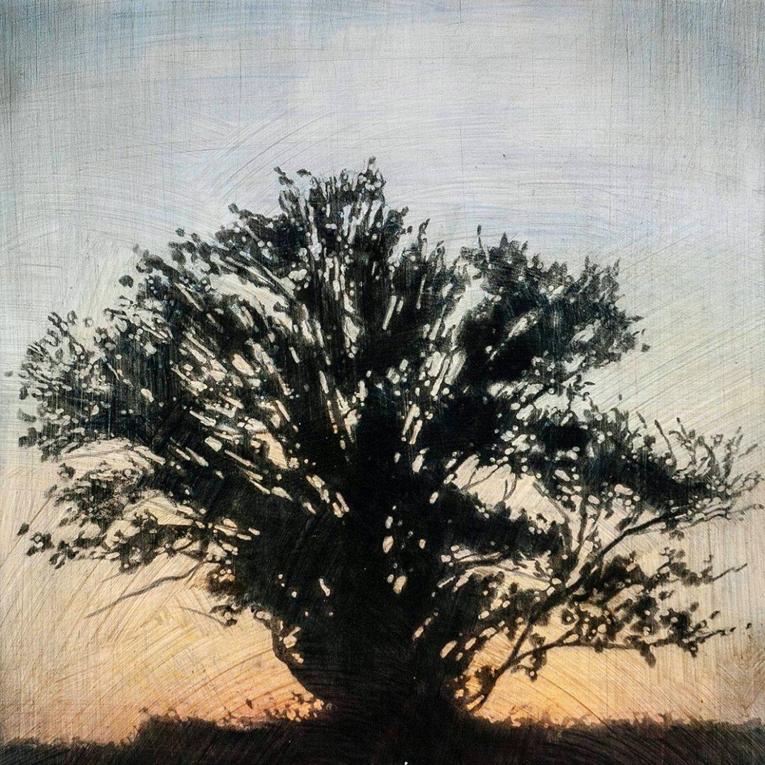 """Tree 1, 16"""" x 16"""" - Stephen Hutchings"""
