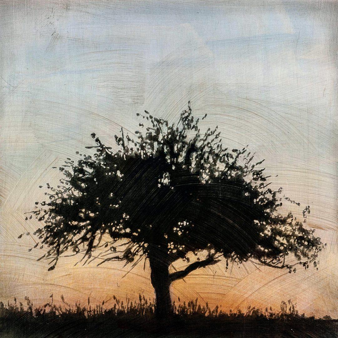 """Tree 6, 16"""" x 16"""" - Stephen Hutchings"""