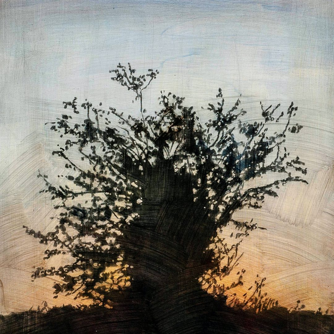 """Tree 11, 16"""" x 16"""" - Stephen Hutchings"""