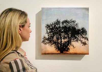 "Tree 12, 16"" x 16"", Installation - Stephen Hutchings"