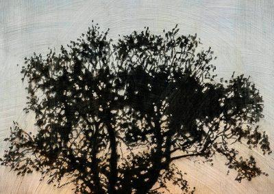 Tree #12