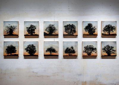 Tree grid, 12 panels (Complete series) - Stephen Hutchings