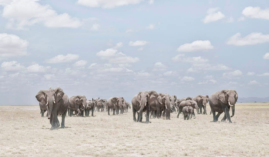 Before Ever After: Photographs from Kenya and Tanzania