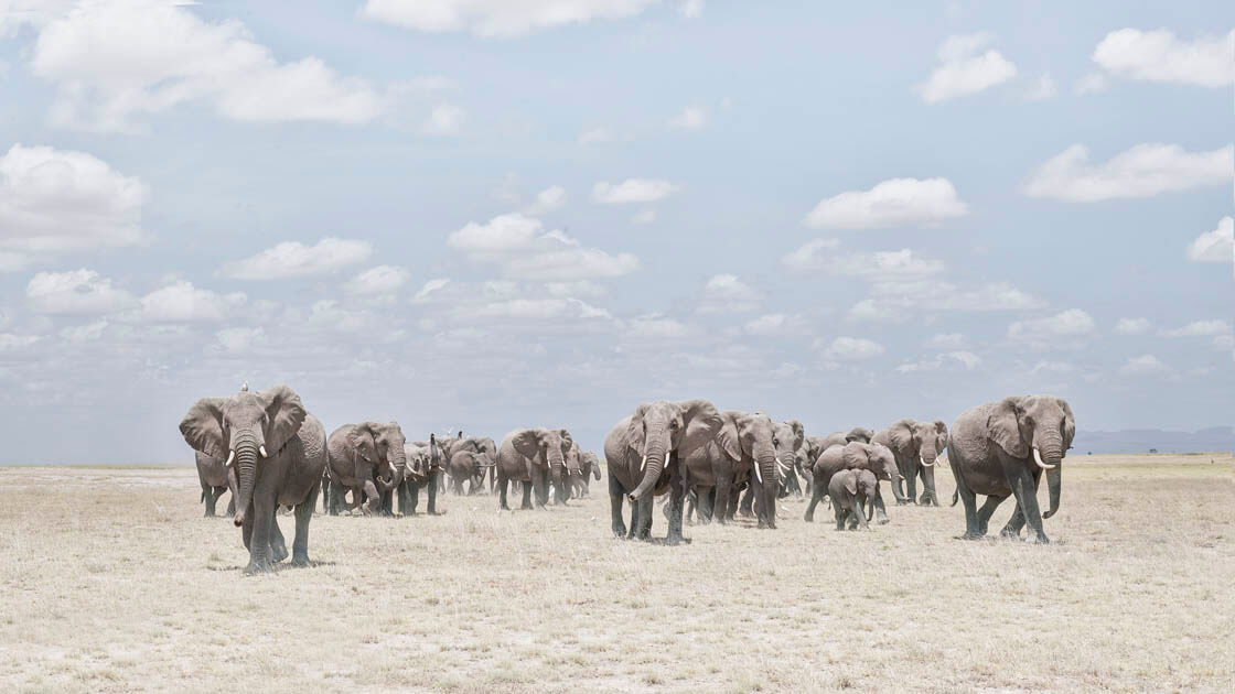 Elephants Crossing Dusty Plain, Amboselli, Kenya - David Burdeny at Kostuik Gallery
