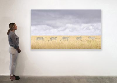 Cheeta Coalition, Maasai Mara, Kenya, 48 x 85, installation