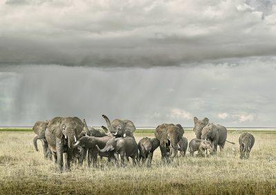 Elephant Day Care Amboseli, Kenya
