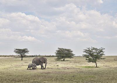 Elephant Mother and Calf, Maasai Mara Kenya
