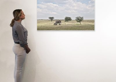 Elephant Mother and Calf, Maasai Mara Kenya 27  x 48 installation