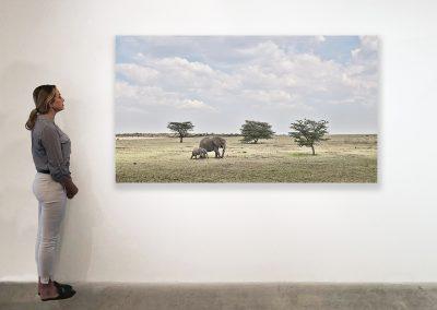 Elephant Mother and Calf, Maasai Mara Kenya 48 x 85 installation