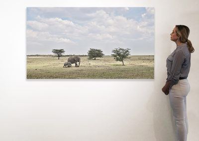 Elephant Mother and Calf, Maasai Mara 37 x 66 installation
