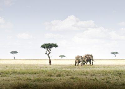 Elephant Pair, Amboseli, Kenya,