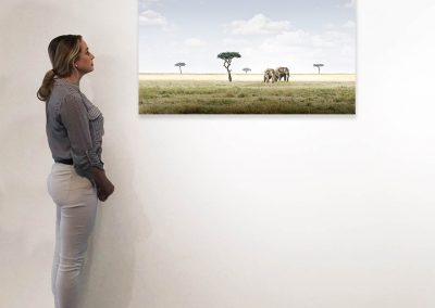 Elephant Pair, Amboseli, Kenya 27 x 48 installation