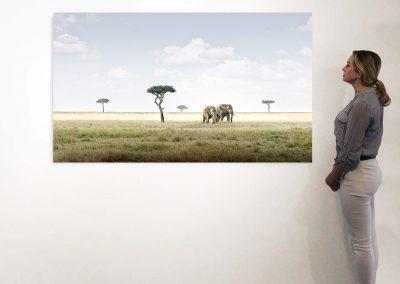 Elephant Pair, Amboseli, Kenya 37 x 66 installation