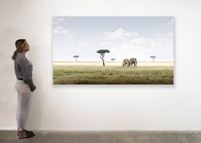 Elephant Pair, Amboseli, Kenya 48 x 85 installation