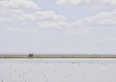 Elephant on the Horizon, Amboseli, Kenya