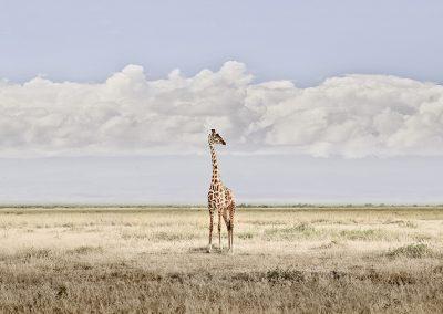 Head in the Clouds, Amboseli, Kenya