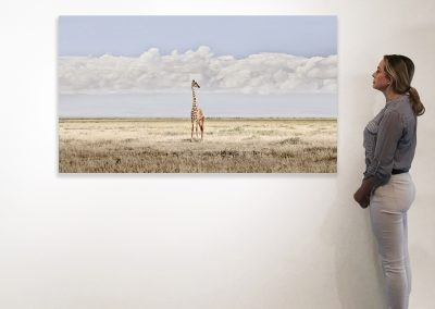 Head in the Clouds, Amboseli, Kenya 37 x 66 installation
