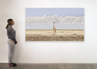 Head in the Clouds, Amboseli, Kenya 48 x 85 installation