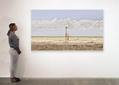 Head in the Clouds, Amboseli, Kenya 48 x 85 installation