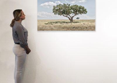 DB_Lion Cubs Under Acacia Tree, Maasai Mara, Kenya_27 x 48_installation