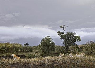 Lioness and Four Cubs (Rivers Edge) Maasai Mara, Kenya, 2019