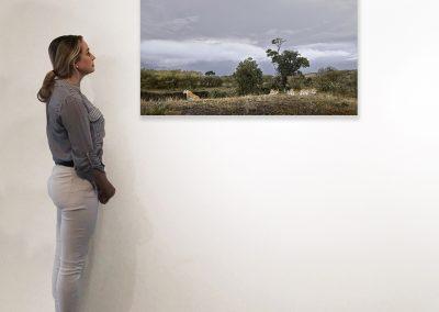 Lioness and Four Cubs Rivers Edge) Maasai Mara, Kenya 27 x 48 installation