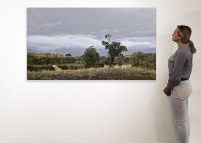 Lioness and Four Cubs Rivers Edge) Maasai Mara, Kenya 37 x 66 installation