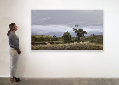 Lioness and Four Cubs Rivers Edge) Maasai Mara, Kenya 48 x 85 installation
