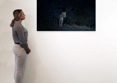 Nocturne (Lioness), Maasai Mara, Kenya, 27 x 48, installation