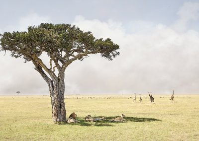 Paradise, Maasai Mara Kenya, 2019