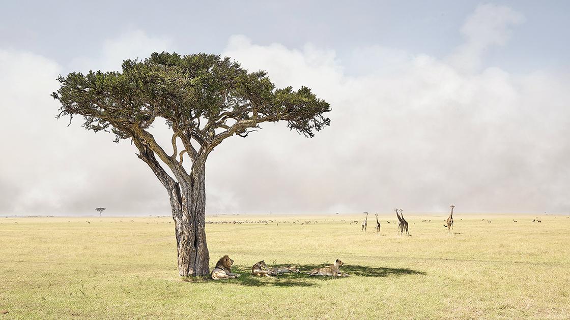 DB_Paradise, Maasai Mara Kenya, 2019