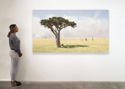 Paradise, Maasai Mara Kenya 48 x 85 installation