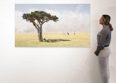 Paradise, Maasai Mara Kenya 37 x 66 installation