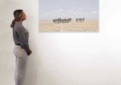 Zebra Plains, Maasai Mara, Kenya 27 x 48 installation