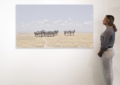 Zebra Plains, Maasai Mara, Kenya 37 x 66 installation